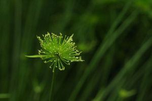 Grass on focus. Even this singled out grass is good when focussed