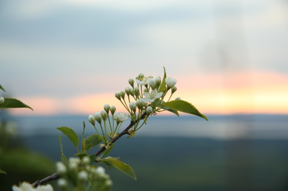 Flowers on a sunset